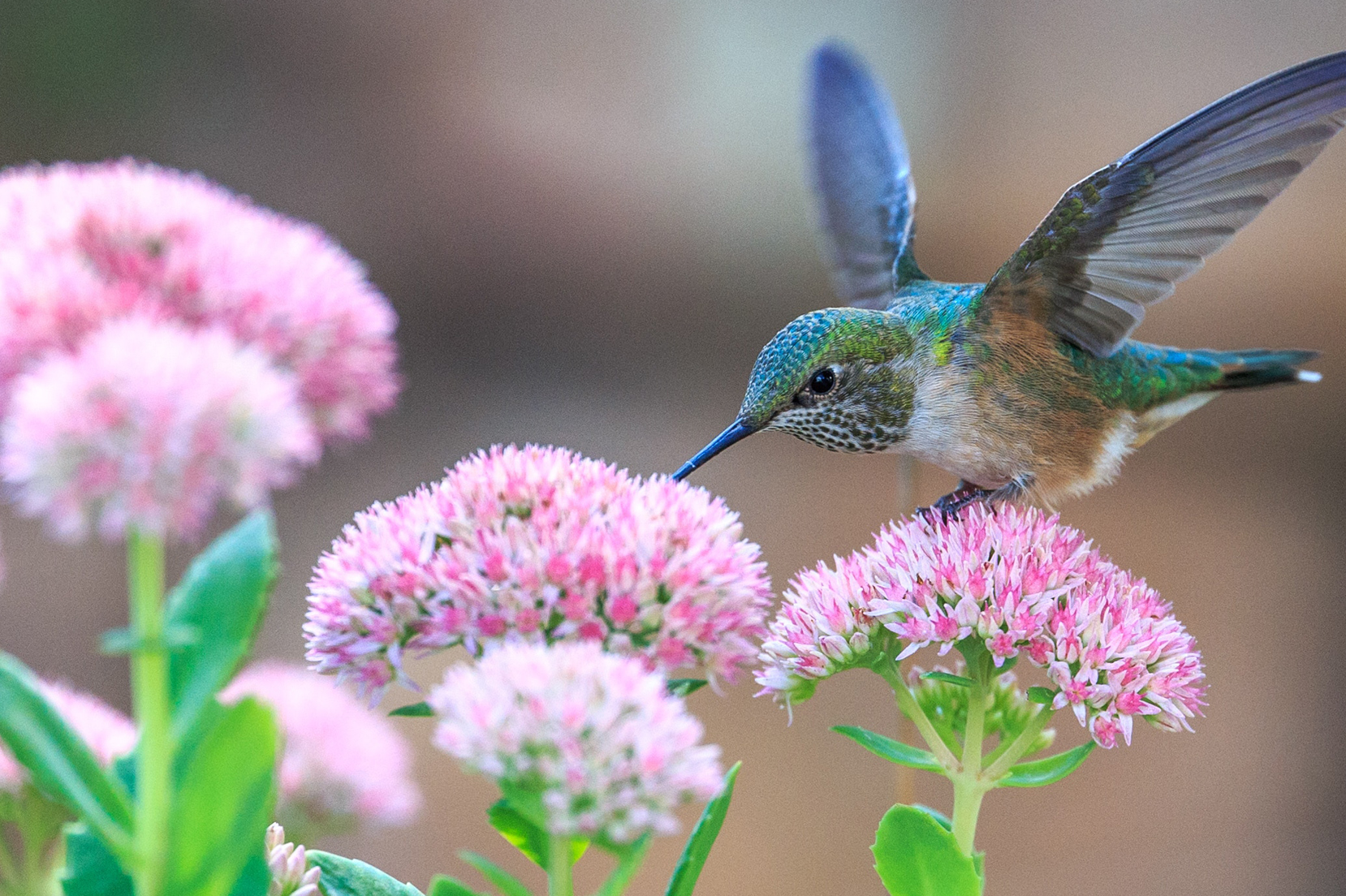 little bird on the flowers